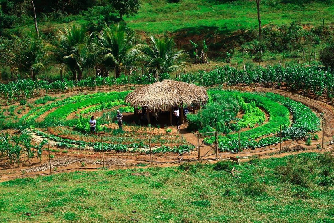 Biologische groentetuinen
